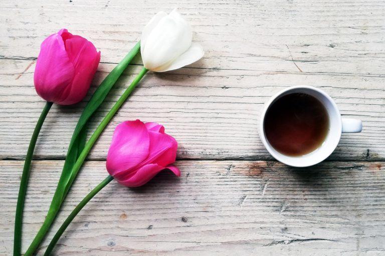 tulipani di primavera e tazza